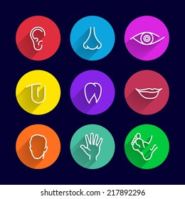 icons set of human bodies, body parts ear nose eyes lips teeth tongue head arm leg