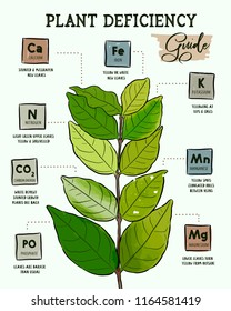Identifying Plant Nutrient Deficiencies, hand draw design vector.