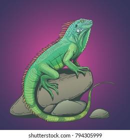 Iguana lizard on a stone hand drawn illustration