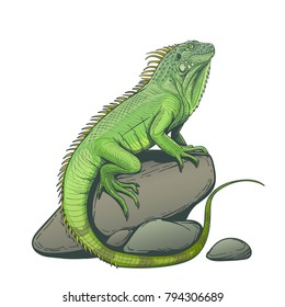 Iguana lizard on a stone hand drawn illustration