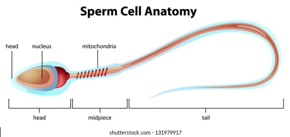 Idea picture of sperm labeled remarkable