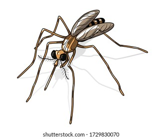 Illustrated mosquito isolated on a white background