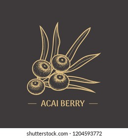 Illustration of Acai berry for the design labels and packaging organic foods