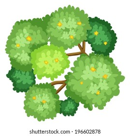 Illustration of an aerial view of a tree on a white background