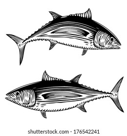 Illustration of a Albacore Tuna