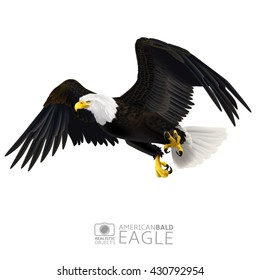 Illustration of american bald eagle, isolated