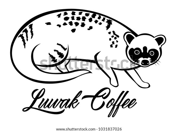 illustration animal luwak stock vector royalty free 1031837026 https www shutterstock com image vector illustration animal luwak 1031837026