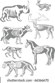 illustration with animals skeletons isolated on white background