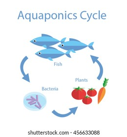 Illustration of aquaponics cycle, a crop production method using fish waste as fertilizer for vegetables and herbs. bacteria process the waste into nutrients the plant roots can absorb.