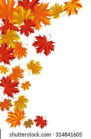 Illustration of autumn maple leaves in various colors isolated