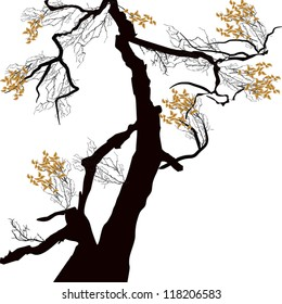 illustration with autumn tree isolated on white background