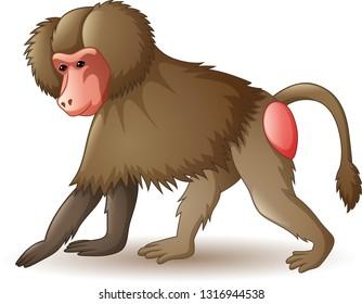 Illustration of baboon isolated on white background
