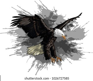 Illustration of a Bald Eagle  -  Vector art
