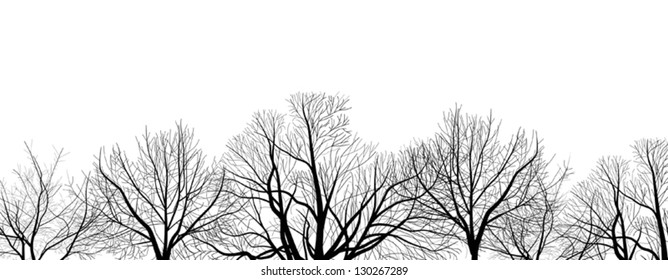 illustration with bare tree branches isolated on white background