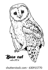 illustration of barn owl; hand drawn picture
