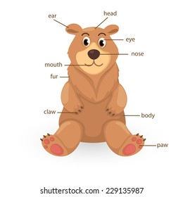 illustration of bear vocabulary part of body vector
