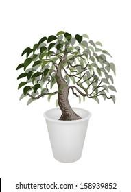 An Illustration of Beautiful Bonsai Tree in A Flowerpot for Garden Decoration
