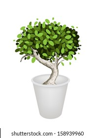 An Illustration of Beautiful Bonsai Tree or Small Plant in A Flowerpot for Garden Decoration