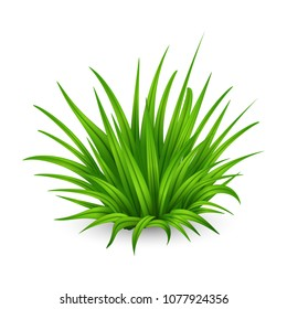 Illustration of big bunch of fresh thick green grass isolated on white background.