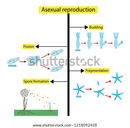 illustration biology asexual reproduction type reproduction stock Endosymbiotic Theory illustration of biology asexual reproduction is a type of reproduction by which offspring arise from