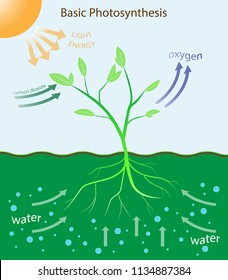 illustration of biology, Basic photosynthesis diagram