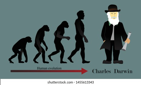 illustration of biology, Human evolution is the evolutionary process that led to the emergence of anatomically modern humans, Anatomical changes, science of evolution, Charles Robert Darwin