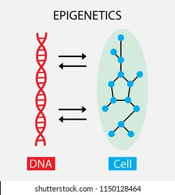 illustration of biology, The interaction between DNA and cells, Epigentic diagram