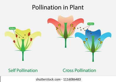 illustration of Biology, Pollination in Plant