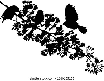 illustration with birds and cherry tree flowers silhouette on white background