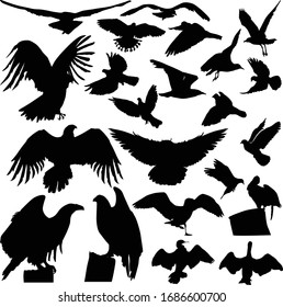 illustration with birds collection isolated on white background