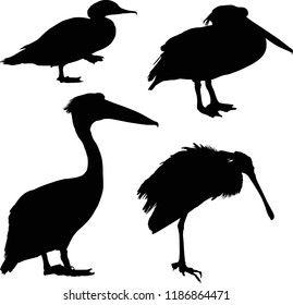 illustration with birds isolated on white background