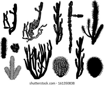 illustration with black cactus collection isolated on white background