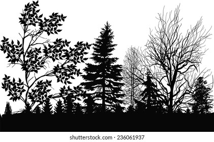 illustration with black forest isolated on white background