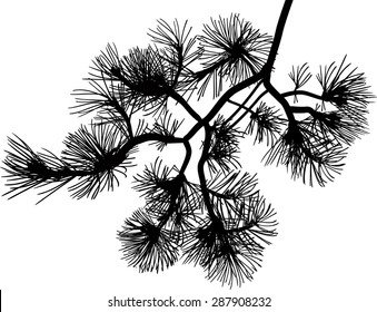 illustration with black pine branch isolated on white background