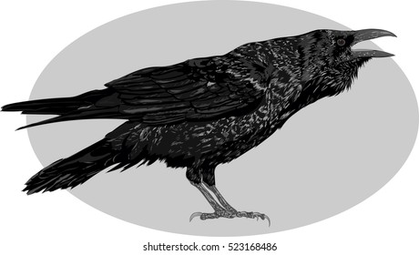 Illustration of the black raven bird. High Detailed Vector Art.