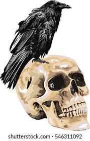 Illustration of the black raven bird  sitting on skull . High Detailed Vector Art.
