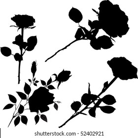 illustration with black rose flowers collection