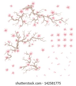 Illustration of bloom cherry branches, flowers and petals