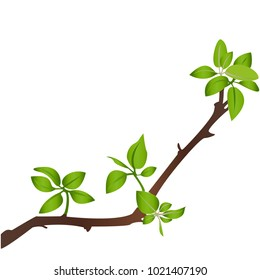 Illustration of a branch on white background. Vector