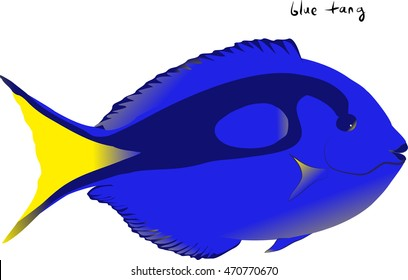 Illustration of a brilliant Blue Tang or Dory aquarium fish isolated on a white background
