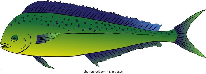 Illustration of a brilliant Mahi Mahi or Dolphin Fish isolated on a white background
