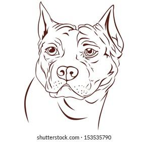 illustration brown pitbull head