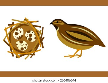 Illustration of brown quail with eggs.