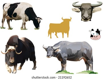the illustration of bulls and cows