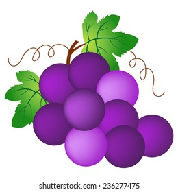 Illustration of a bunch of grapes isolated on white background.