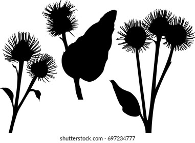 illustration with burdock silhouettes isolated on white background