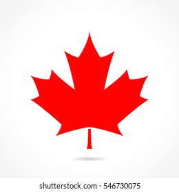 Illustration of canada red leaf icon design
