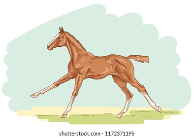 An illustration of a cantering foal on the white background.
