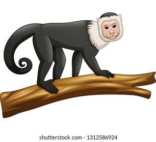 Illustration of Capuchin monkey isolated on white background
