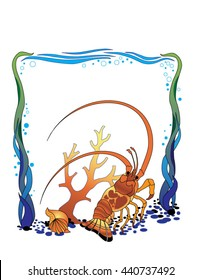 Illustration of Caribbean Spiny Lobster with seaweed, Coral & Shell